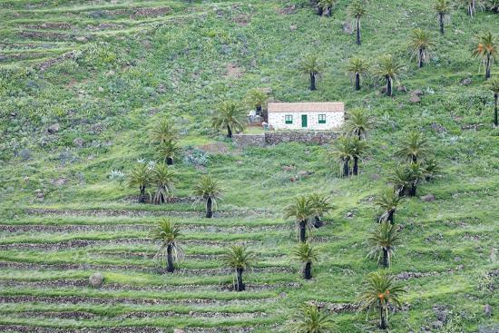 Finca, Palm Grove, Near Alajero, La Gomera, Canary Islands, Spain, Europe-Markus Lange-Photographic Print