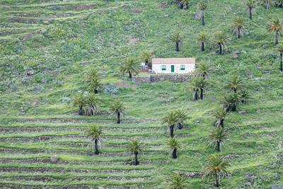 https://imgc.artprintimages.com/img/print/finca-palm-grove-near-alajero-la-gomera-canary-islands-spain-europe_u-l-pwfo500.jpg?p=0