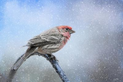 Finch in the Snow-Jai Johnson-Giclee Print