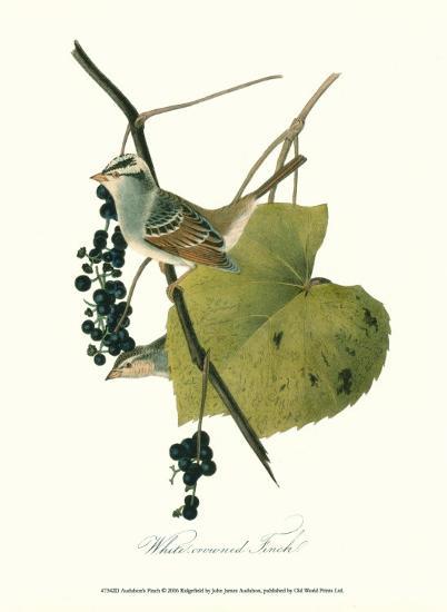 Finch-John James Audubon-Art Print