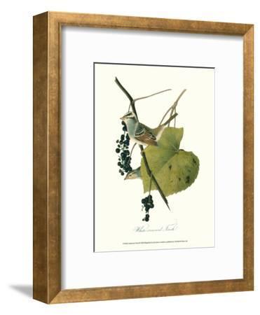 Finch-John James Audubon-Framed Art Print