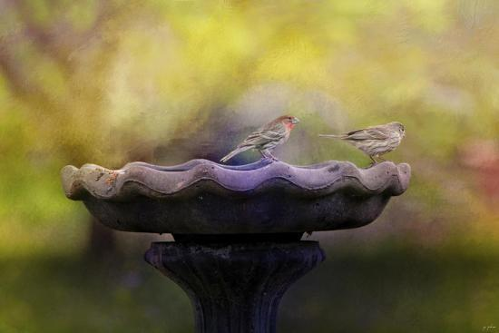 Finches on the Bird Bath-Jai Johnson-Giclee Print