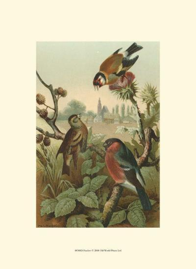Finches--Art Print