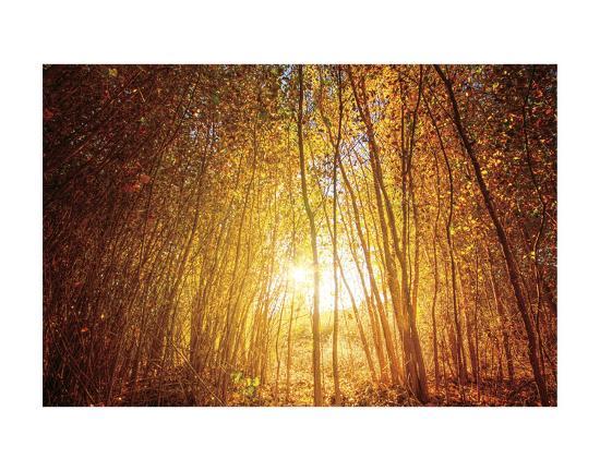 Finding Fall-Bob Larson-Art Print