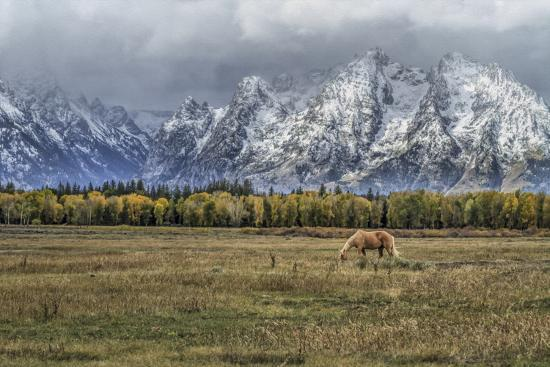 Fine Dining In The Tetons-Galloimages Online-Photographic Print