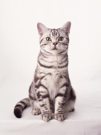 Finnegan the Cat I--Photo