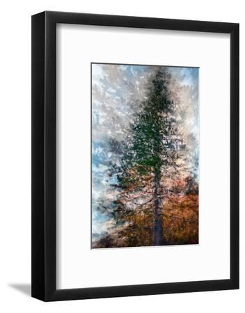 Fir-Ursula Abresch-Framed Photographic Print