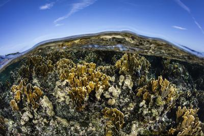 Fire Corals Grow Along a Reef Crest in the Caribbean Sea-Stocktrek Images-Photographic Print