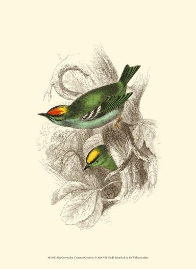 Fire-Crowned and Common Goldcrest-Sir William Jardine-Art Print
