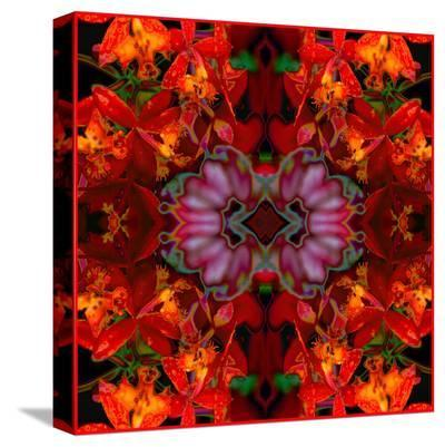 Fire Orchids-Rose Anne Colavito-Stretched Canvas Print