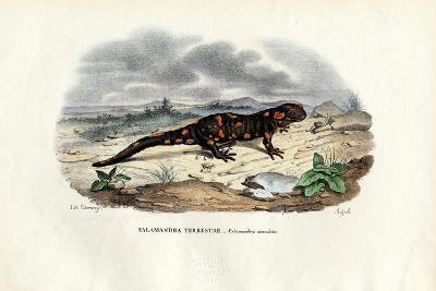 Fire Salamander, 1863-79-Raimundo Petraroja-Giclee Print