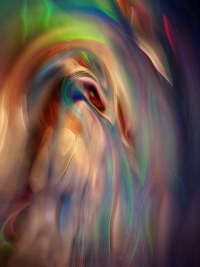 Firebird-Ursula Abresch-Photographic Print