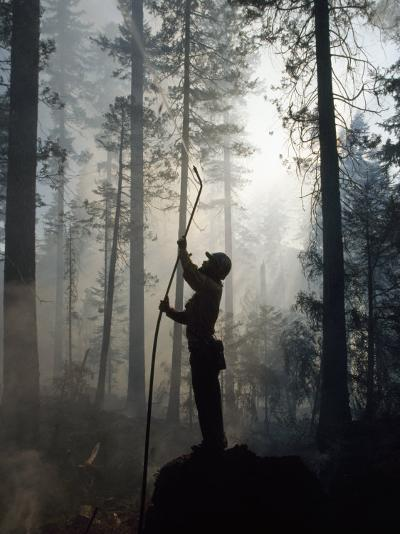 Firefighter Spraying Water Up into Trees in a Forest Fire-Chris Johns-Photographic Print