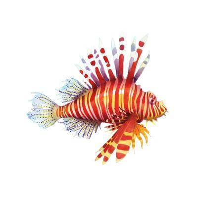 https://imgc.artprintimages.com/img/print/firefish_u-l-q1ddmoq0.jpg?p=0