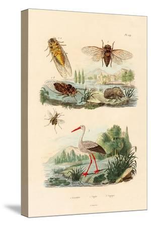 Firefly, 1833-39
