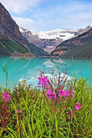 Fireweed at Lakeside, Lake Louise, Canada-George Oze-Photographic Print