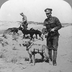 First Aid Dogs, World War I, C1914-C1918