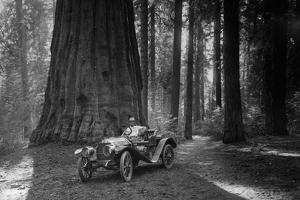 First Auto to Enter Sequoia National Park