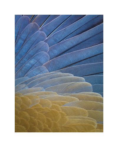 First Light Flight-Don Paulson-Giclee Print