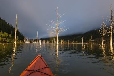 First Person POV Of Kayaking, Through The Trees Of Earthquake Lake In SW Montana, Near Yellowstone-Austin Cronnelly-Photographic Print