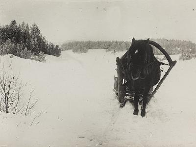 First World War: A Horse-Drawn Sleigh in the Snow--Photographic Print