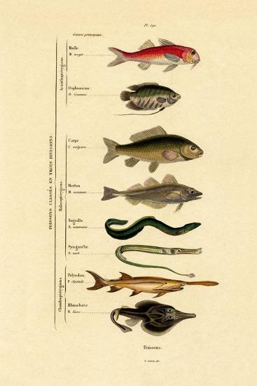 Fish, 1833-39--Giclee Print