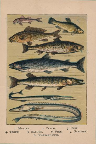'Fish', 1907, (1907)-Unknown-Giclee Print