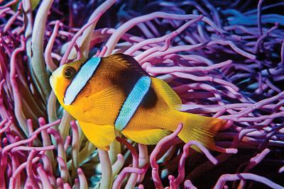 Fish 2-Lee Peterson-Photographic Print