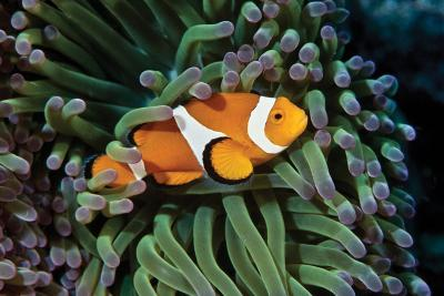 Fish 3-Lee Peterson-Photographic Print