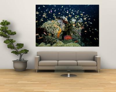 Fish Abound in a Coral Reef off the Coast of Papua New Guinea-Wolcott Henry-Wall Mural