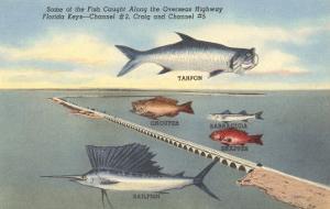 Fish, Bridge, Florida