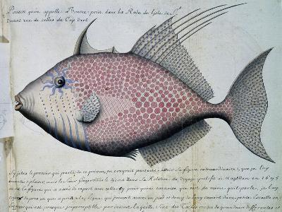 Fish Called Bource--Giclee Print