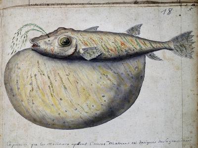 Fish Called Crocros--Giclee Print