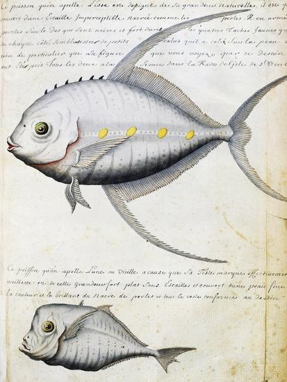 Fish Called Lisse and Moon Fish--Giclee Print