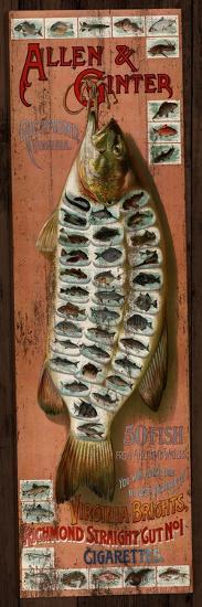 Fish Cards-Kate Ward Thacker-Giclee Print