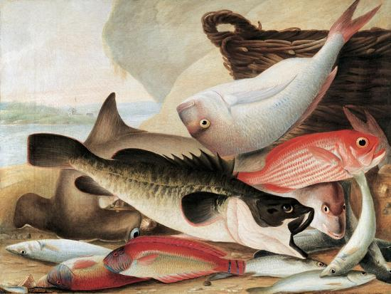 Fish Catch and Dawes Point, Sydney Harbour, C.1813-John William Lewin-Giclee Print