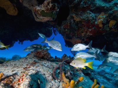 Fish, Cozumel, Mexico, Caribbean, North America-Antonio Busiello-Photographic Print