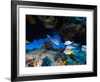 Fish, Cozumel, Mexico, Caribbean, North America-Antonio Busiello-Framed Photographic Print