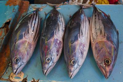 https://imgc.artprintimages.com/img/print/fish-for-sale-at-the-market-hall-in-honiara-capital-of-the-solomon-islands-pacific_u-l-q13clna0.jpg?p=0