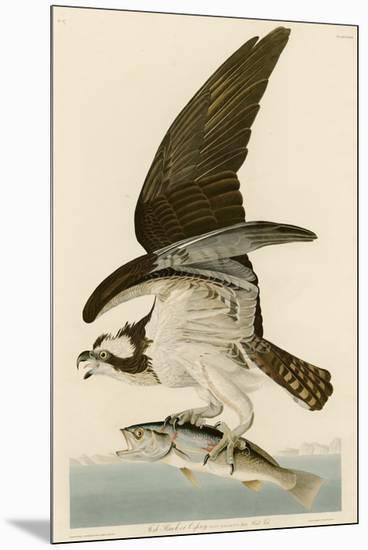 Fish Hawk or Osprey-John James Audubon-Mounted Giclee Print