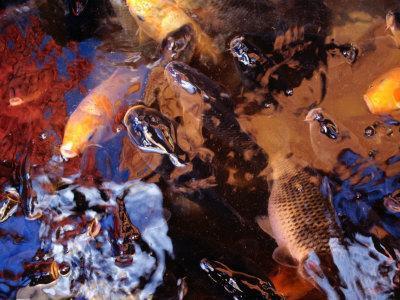 https://imgc.artprintimages.com/img/print/fish-in-a-pool-of-water-manado-north-sulawesi-indonesia_u-l-p3tq8d0.jpg?p=0