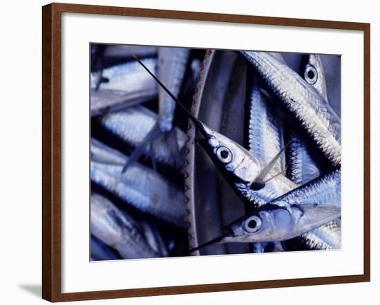 Fish Market, Stone Town, Island of Zanzibar, Tanzania, East Africa, Africa-Yadid Levy-Framed Photographic Print