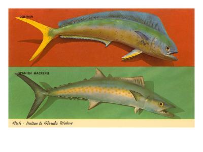 Fish Native to Florida Waters--Art Print