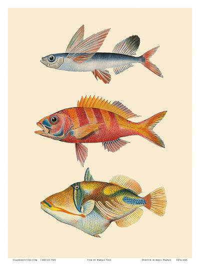 Fish of Hawaii Triptych - Flying Fish , Hawaiian Ruby Snapper Onaga , Reef Triggerfish-Pacifica Island Art-Art Print