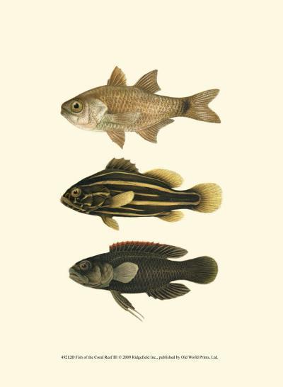 Fish of the Coral Reef III--Art Print