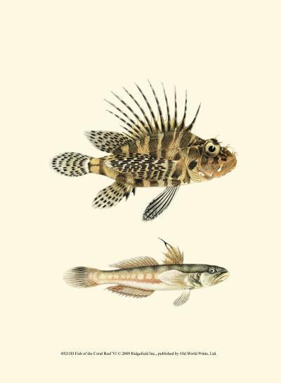 Fish of the Coral Reef VI--Art Print
