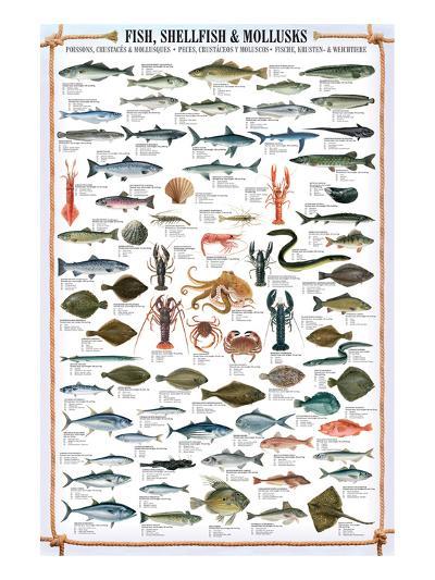 Fish Shellfish and Mollusk--Art Print