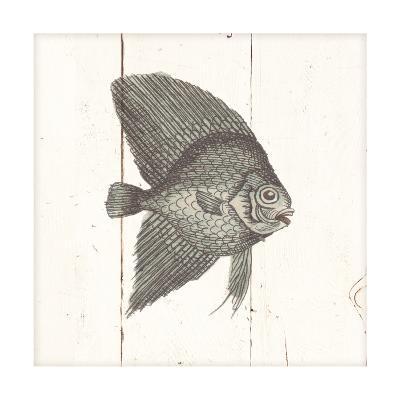Fish Sketches III Shiplap-Wild Apple Portfolio-Art Print