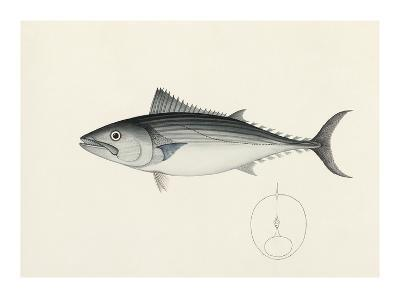 Fish Study in Blue and Grey- Oriental School -Premium Giclee Print