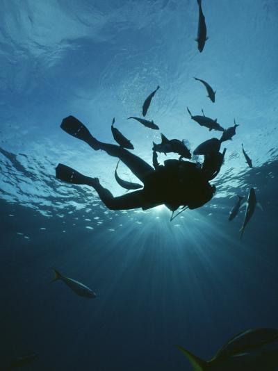 Fish Swim Around a Diver-Raul Touzon-Photographic Print